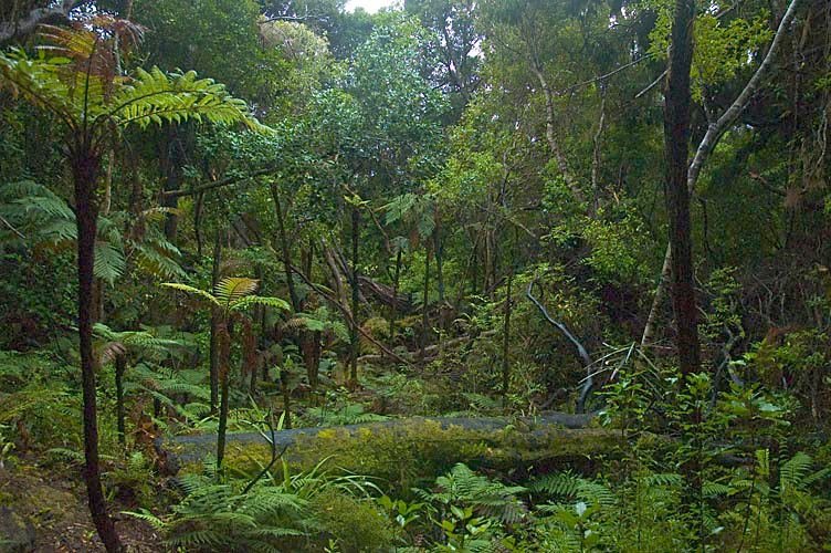 Ulva Island rainforest Stewart Island New Zealand