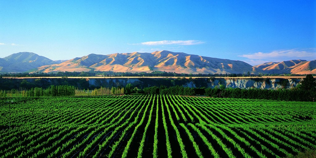 Blenheim wine region New Zealand